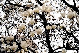 cheap white flowers
