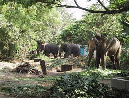 guruvayoor elephants