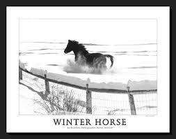 horse winter