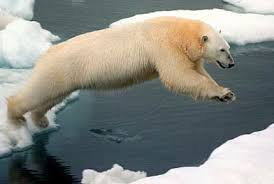 global warming affecting