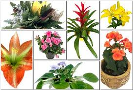houseplants flowers