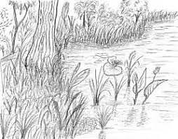 nature drawing