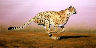 cheetah paintings