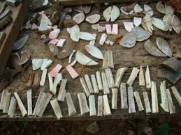 kinds of shells