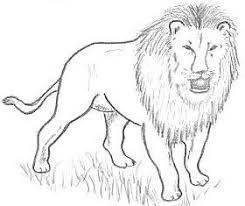 easy animal drawings