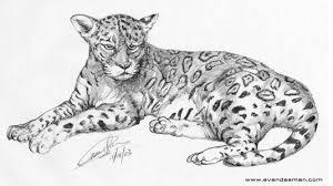 jaguar drawings