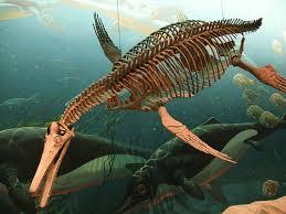 plesiosaur fossils