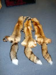 fox hides