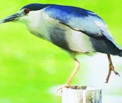 wildlife sanctuaries in south asia