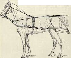 harness for horse