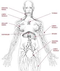 name parts of the body