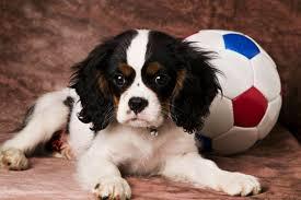 doggy ball
