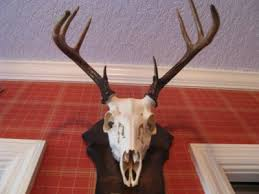 european mount deer