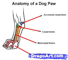 how to draw dog paws