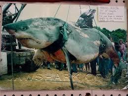 man eating sharks