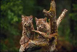 redwood national park animals
