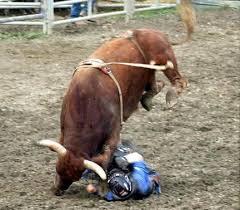bull riding wrecks