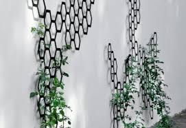 climbing plants trellis