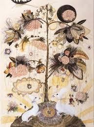 botanical flower drawings