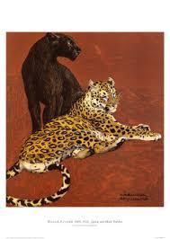 black panther jaguar