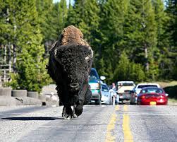 national park animals