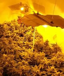 indoor weed growing