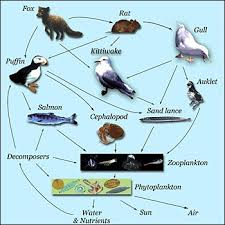 oceans food chains