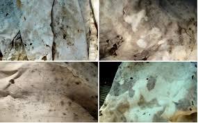 mold on fabric