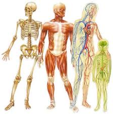 body human picture