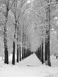 تصاویر دیدنی از زمستان