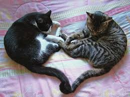 pictures of cute cats and kittens