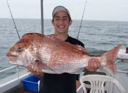 fishing snapper