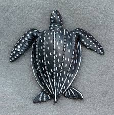 pictures of leatherback sea turtles