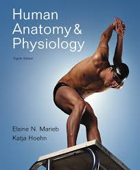 human anatomy and physiology textbooks
