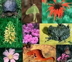 pictures of biodiversity