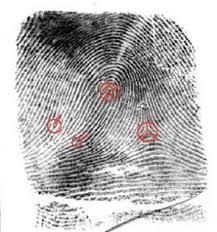 forensic science finger prints