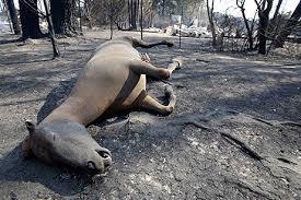 australian wildfire