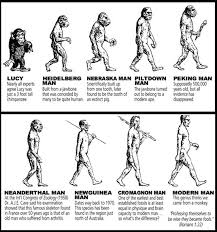 darwin evolution theory