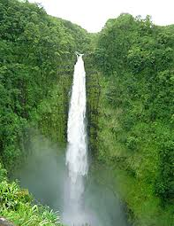 hawaiian tropical rainforest