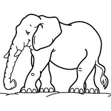 all animal coloring pages