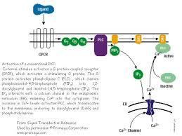 pkc signalling