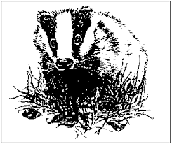 badger boy