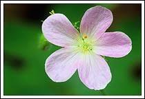 ga flowers