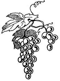 grapes drawings