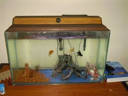 gold fish aquariums