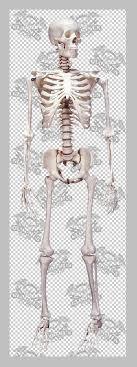 free skeleton pictures