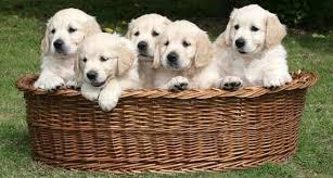 guide dog photos
