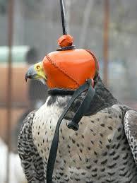 falconry hood