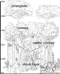 ecosystems rainforests