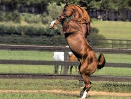 rearing horse images